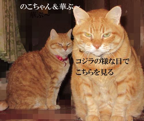 IMG_0122.jpg