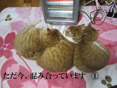IMG_0420.jpg
