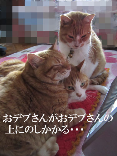 IMG_0481.jpg