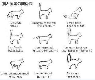 ネコのシッポと感情