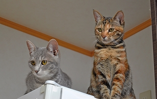 20151122姉妹ネコ