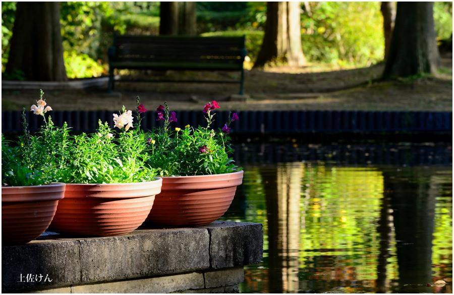 都市緑化植物園5