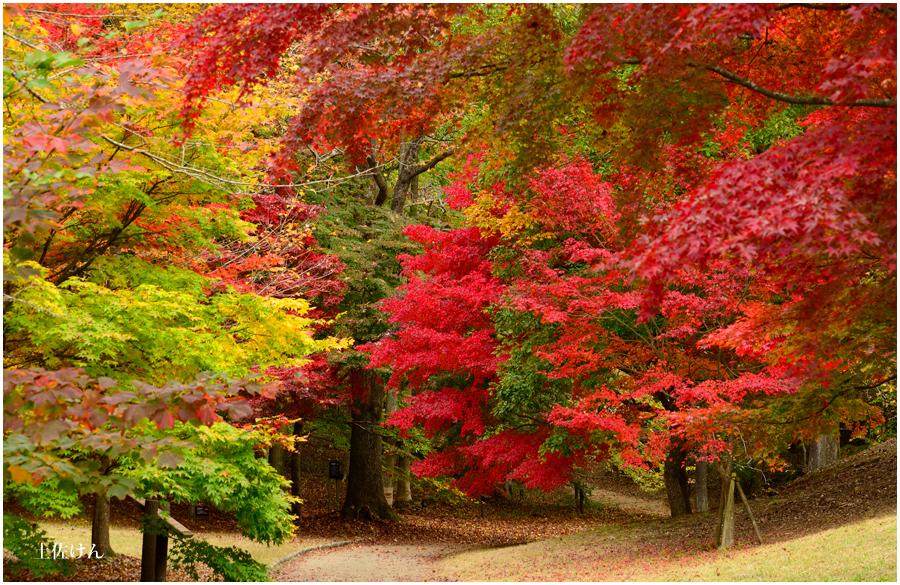神戸森林植物園1