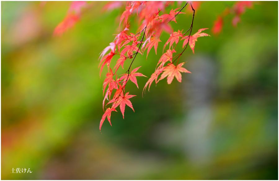 神戸森林植物園4