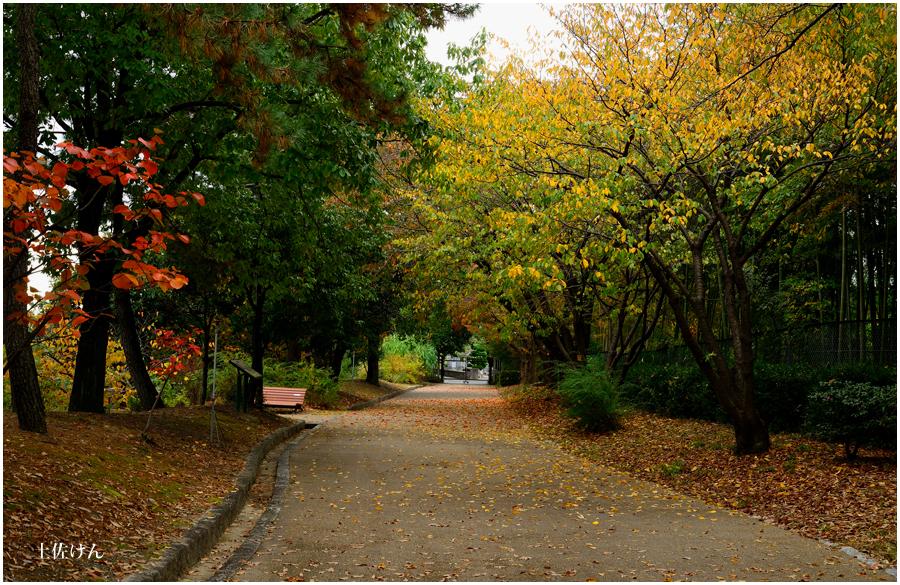 都市緑化植物園1