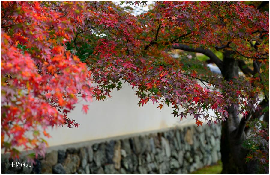 秋の京都1