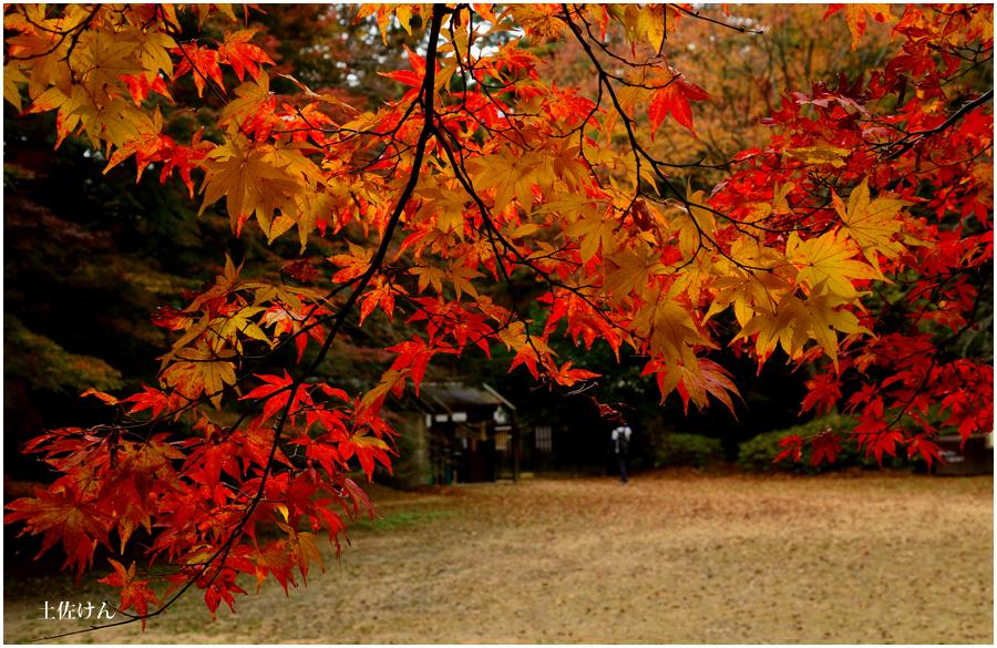 森林植物園4