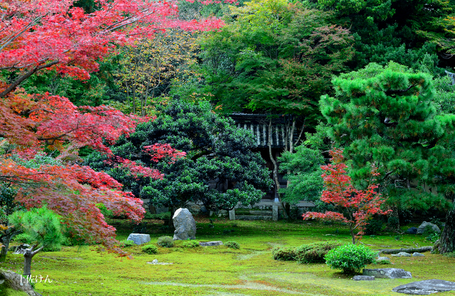 秋の京都4