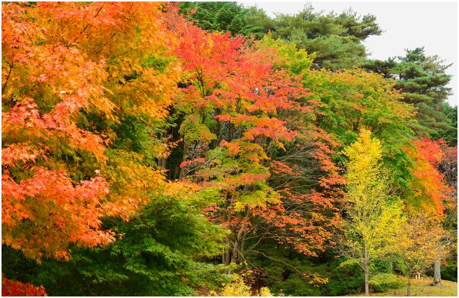 神戸森林植物園・助手1
