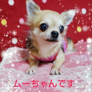 fc2blog_201512272213385bc.jpg