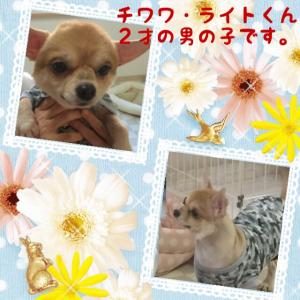 fc2blog_201512292135541ad.jpg