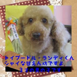 fc2blog_201601031930460a9.jpg