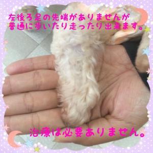 fc2blog_20160111201924fe7.jpg