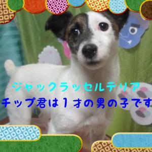fc2blog_20160126091458530.jpg