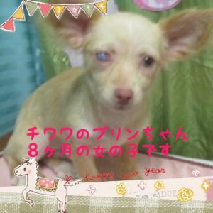 fc2blog_201601260915025f6.jpg