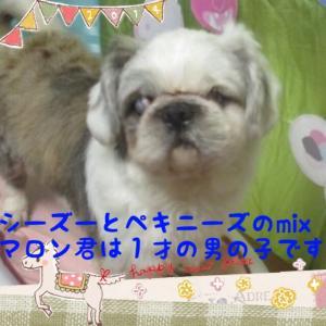 fc2blog_201601260915050be.jpg