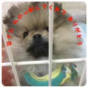 fc2blog_20160203195812a3e.jpg