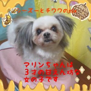 fc2blog_201602232348084e4.jpg