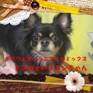 fc2blog_20160229204845a43.jpg