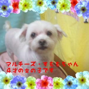 fc2blog_2016022920485024e.jpg