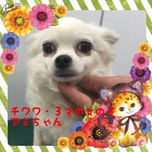 fc2blog_201603052016274b8.jpg