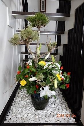 2016正月花