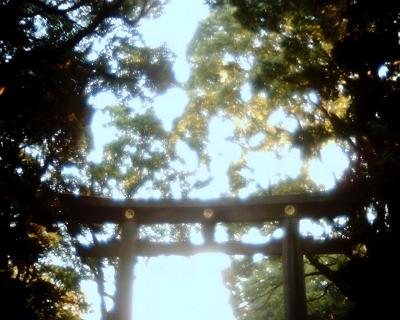 明治神宮の鳥居の上に・・・:Entry