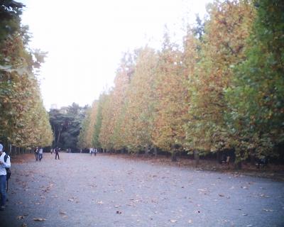 色づくプラタナス並木・新宿御苑:R2