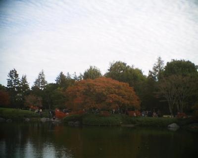 紅葉・昭和記念公園:R2