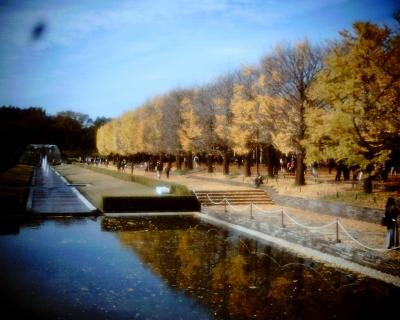 イチョウの黄葉・昭和記念公園:Entry