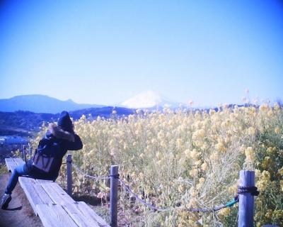 菜の花と富士山を撮る・吾妻山公園:R2