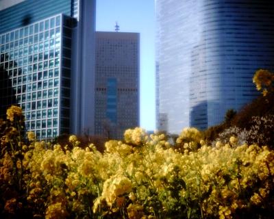 汐留と菜の花・浜離宮庭園:Entry