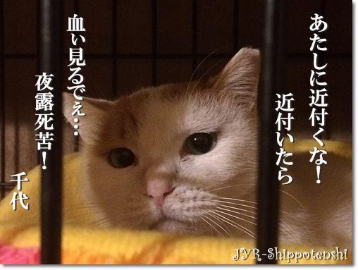 chiyo151205.JPG