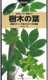 201509_樹木の葉