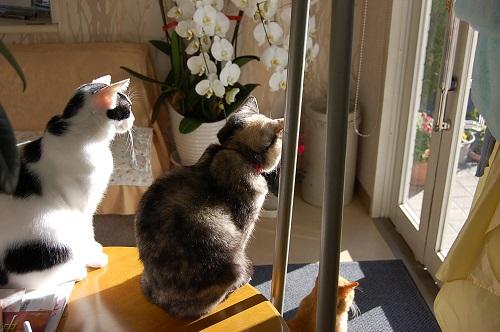 胡蝶蘭と三匹の猫