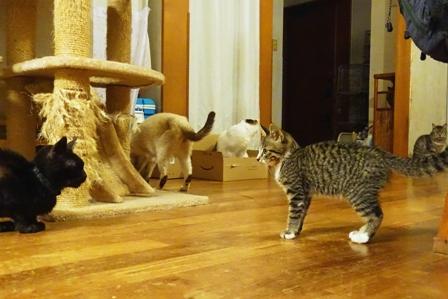 つんだら家の猫たち DSC02055