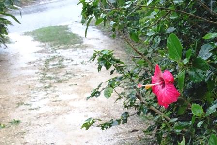 大雨アプローチ DSC02820