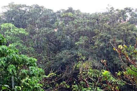 大雨樹木 DSC02792