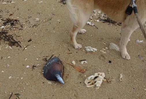 DSC02678 - 大きな貝