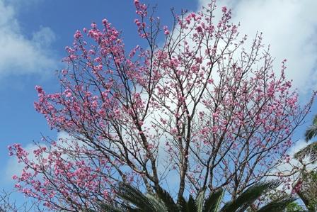 桜 DSC03738