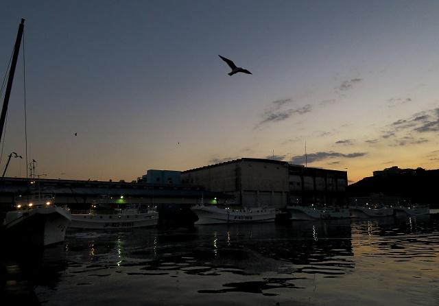 160124-勝浦漁港-1-003-S