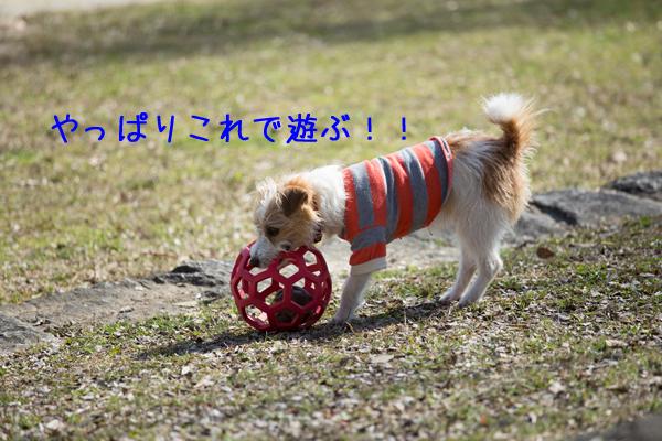 IMG_7925.jpg