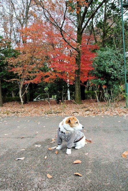 2015長岡公園0945