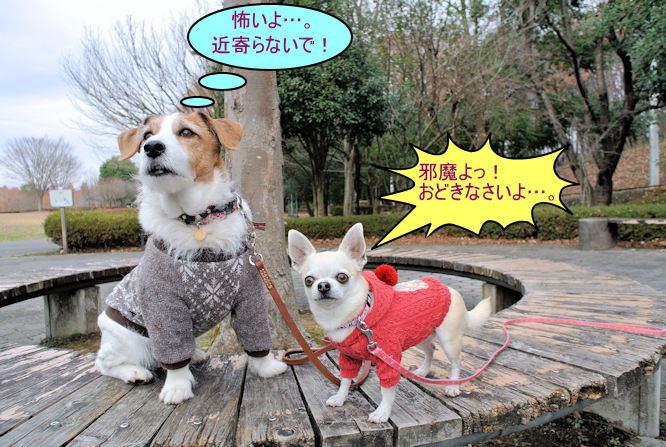 2015長岡公園0951
