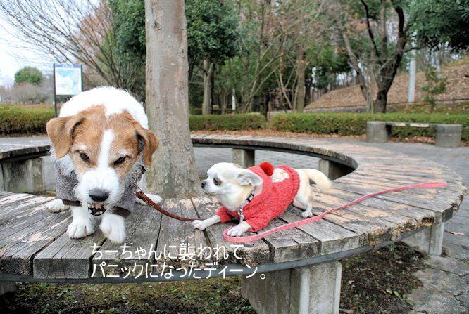 2015長岡公園0952