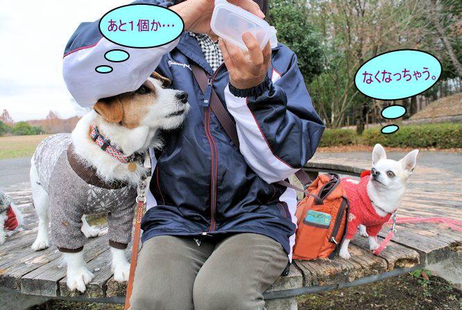 2015長岡公園0953