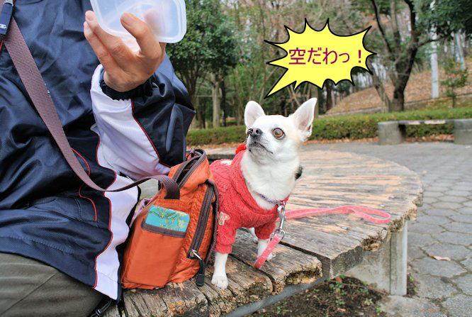 2015長岡公園0949