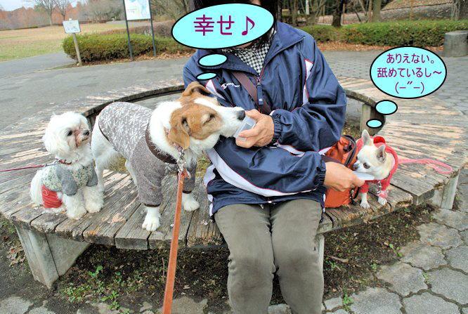 2015長岡公園0954