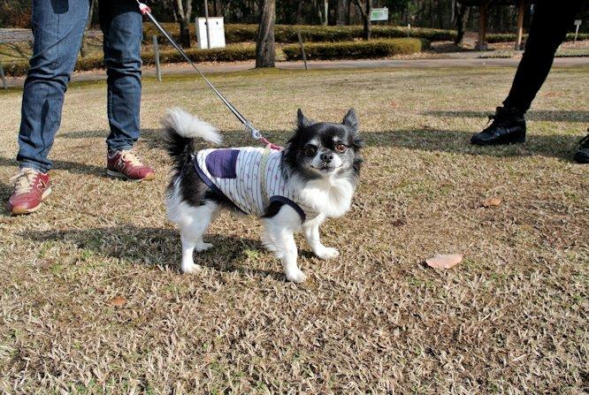 2015長岡公園0968
