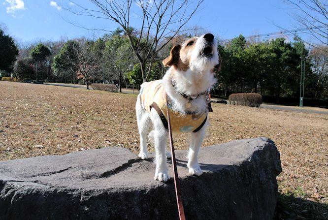 2015長岡公園0975